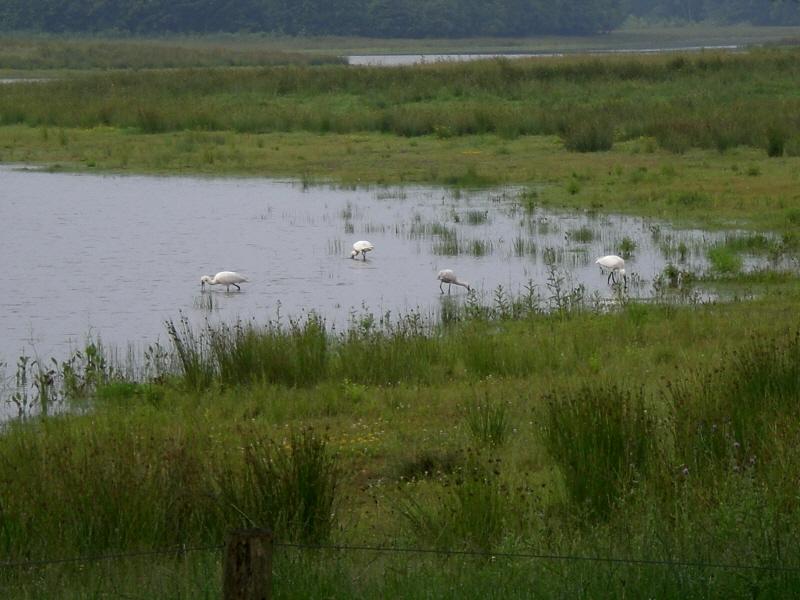 Landgoed Vossenberg, Lepelaars reigerveen - Het Drentse Landschap