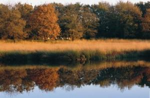 Kampsheide - Foto: Jaap de Vries