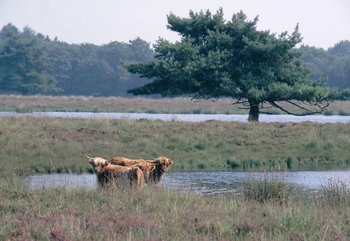 Bouwersveld – Koelingsveld