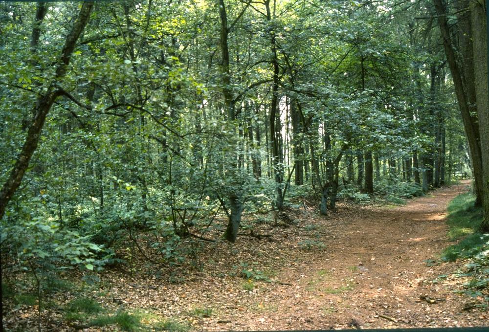 Esbosjes Zuidwolde - Het Drentse Landschap