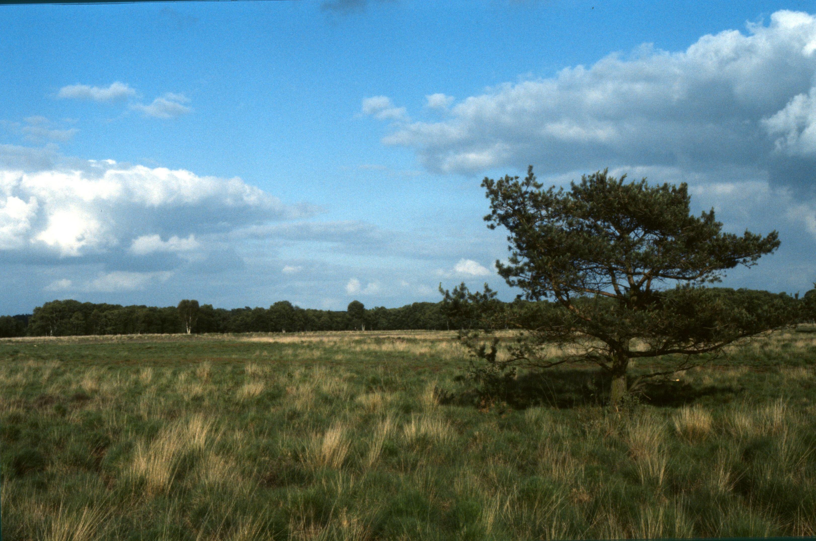 Nolderveld - Archief Het Drentse Landschap