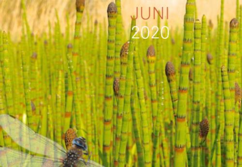 Activiteiten agenda tweede kwartaal 2020